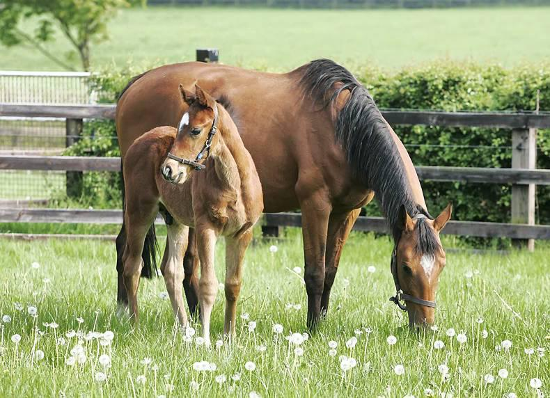 NEWS IN BRIEF: Some racing and breeding stories from the December 26th issue