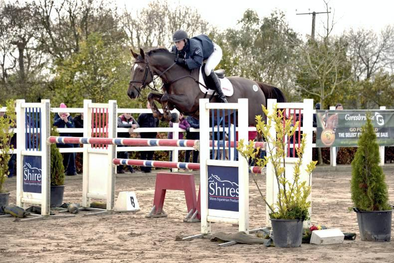 SALES REVIEW: 2015 a record-breaking year for sport horse sales