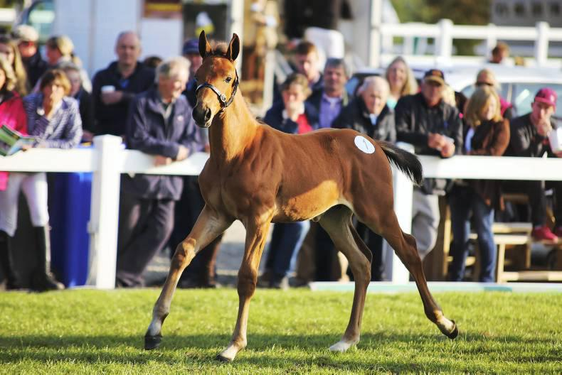 SALES REVIEW 2015: Quality foals hit a high note