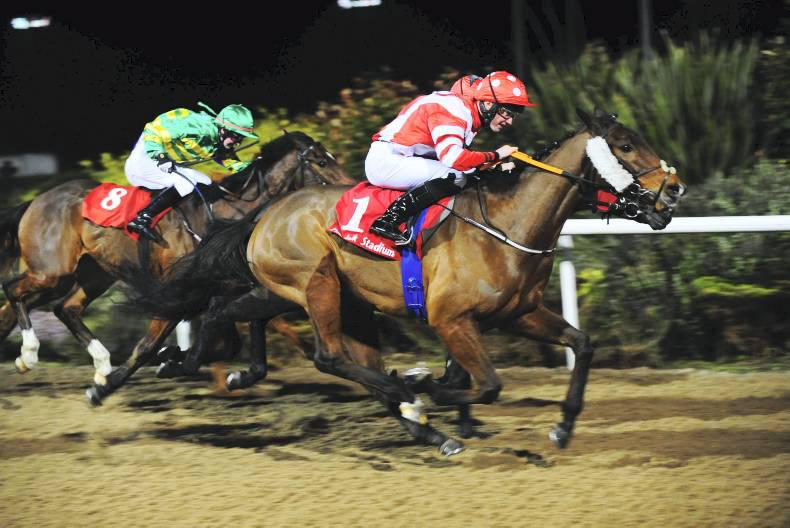 DUNDALK FRIDAY: Political Policy deserves a crack at Lingfield