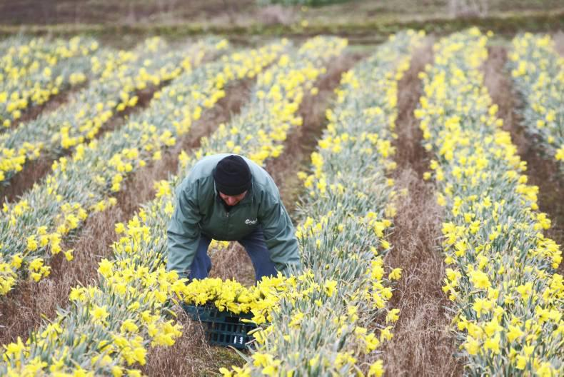 PONY TALES: Get busy for Daffodil Day