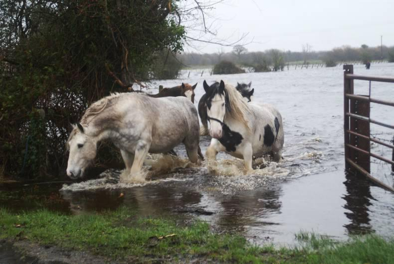 Support urgently needed for flood relief fundraiser