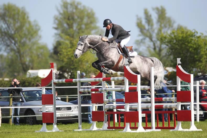 Jumping stallion on the move