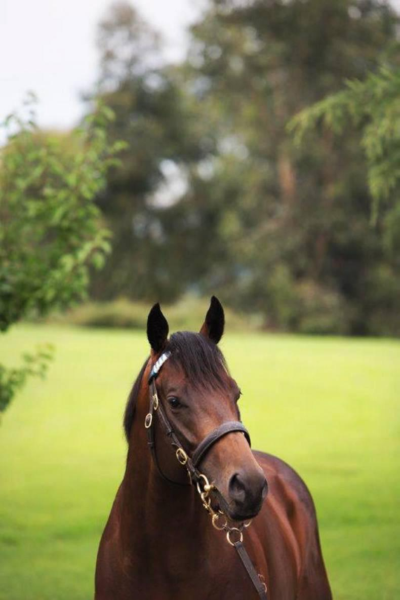 SIRE REVIEW: Hallowed Crown is great value at Kildangan