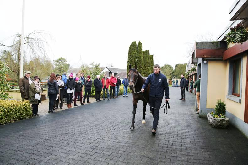 ITM IRISH STALLION TRAIL: What's in store for second year of Stallion Trail?