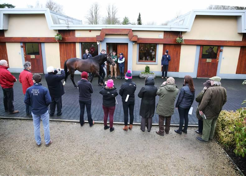 ITM IRISH STALLION TRAIL: Q&A with industry experts