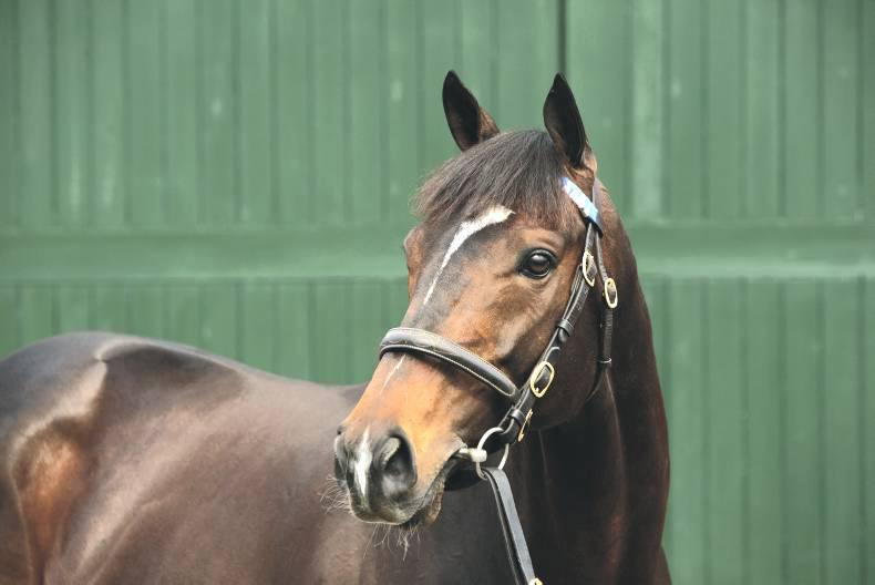 SIRE REVIEW: Prolific stakes-winning son of Shamardal