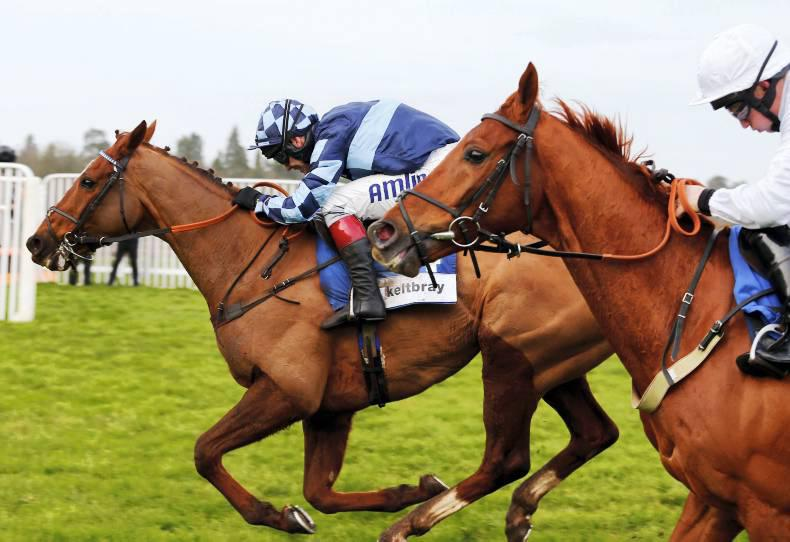 PEDIGREE ANALYSIS: Kasbah another of note for Shirocco
