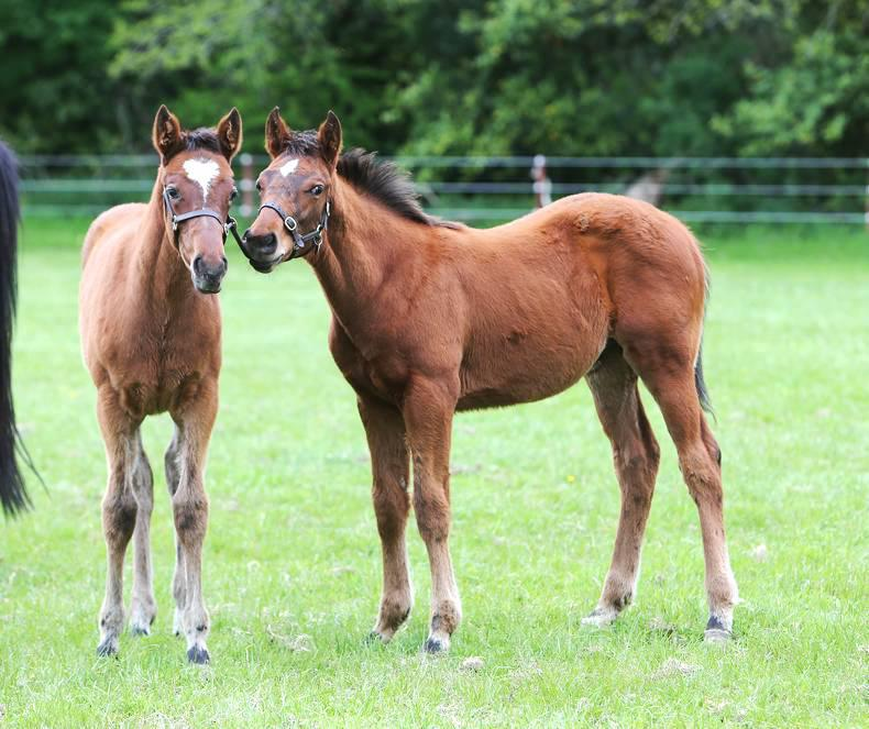 NEWS IN BRIEF: Racing and breeding stories from the January 30th issue
