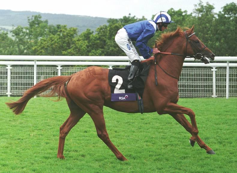 SIRE REVIEWS: Aljamaaheer : Standing at Tara Stud