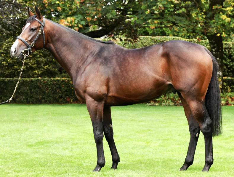 SIRE REVIEWS: Pour Moi : Standing at Coolmore Stud