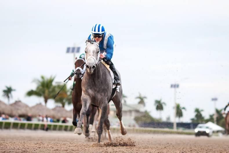 AMERICA: Mohaymen sails to top of Triple Crown list