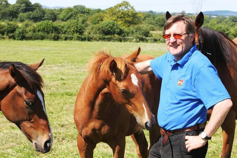 FOALING: Keep mares under constant surveillance