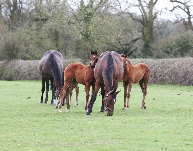 FOALING: Your checklist for before and after foaling