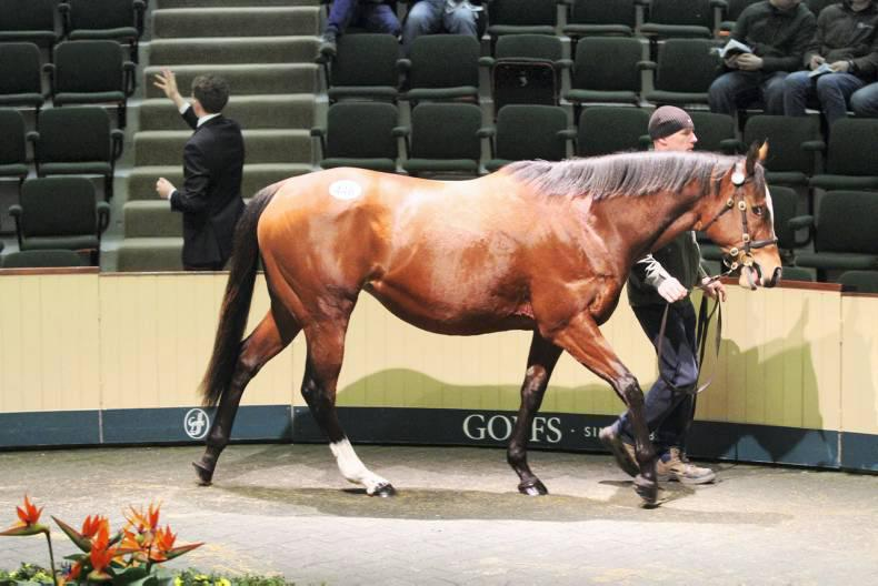 Marcel's dam to be sold privately by Goffs
