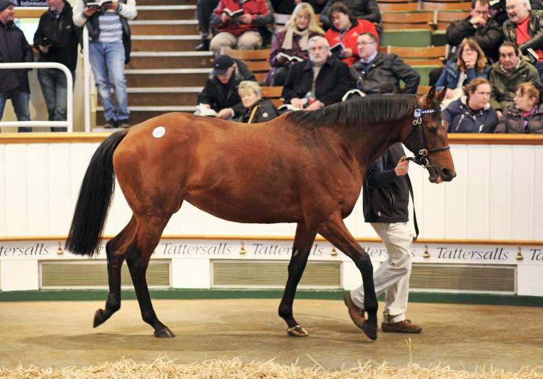 TATTERSALLS FEBRUARY SALE: Record turnover for February Sale