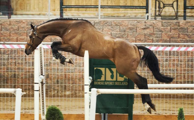 Horse Sport Ireland inspections - Breeders and buyers air their views