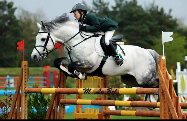 Show jumping stallion back home after theft ordeal
