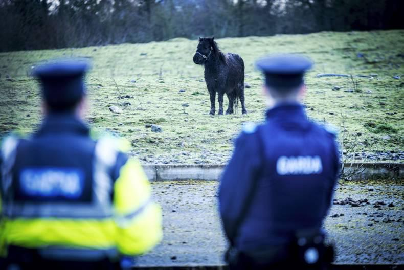 Operation Storm seizes 29 horses in Kilkenny