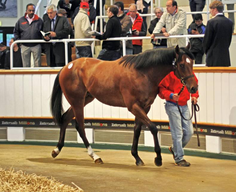 Frankel two-year-old to be sold at Tattersalls