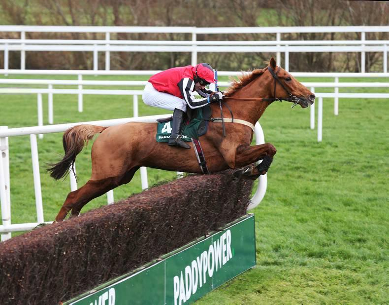 NAAS SUNDAY: Simply Ned to get his day