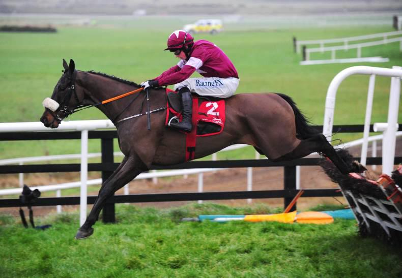 PEDIGREE ANALYSIS: Ball D'Arc another rising star for Network