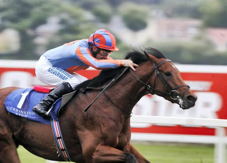 SIRE REVIEW: Archipenko: Standing at Lanwades Stud
