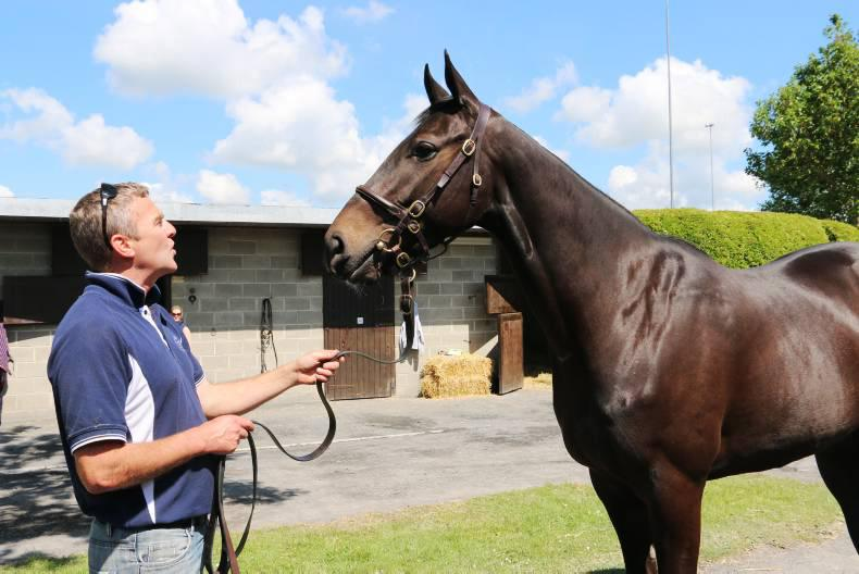 BREEDING INSIGHTS: Hardline set to become a headline