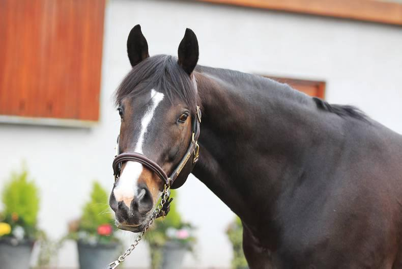 SIRE REVIEW: LAWMAN : Standing at Ballylinch Stud