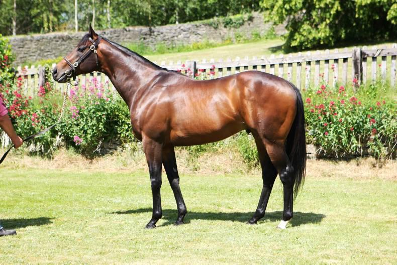 SIRE REVIEW: INTENSE FOCUS : Standing at Ballylinch Stud