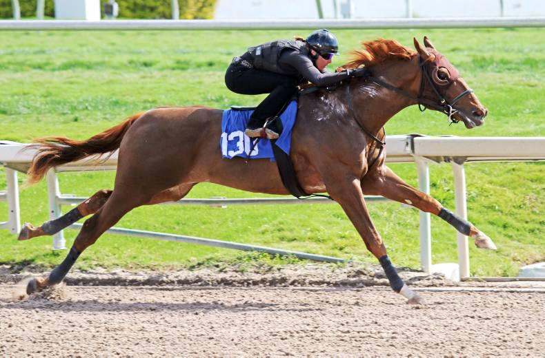 M.V. Magnier buys two $1 million colts at Fasig-Tipton Florida Sale