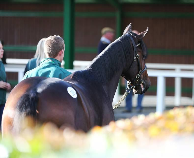 Extra day for Goffs Sportsman's Sale