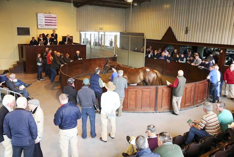 New Goresbridge event horse sale