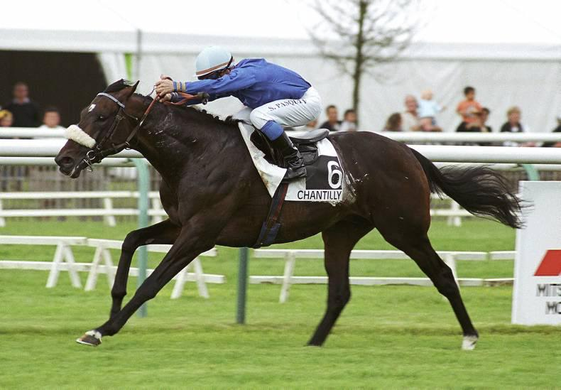 SIRE REVIEWS: Policy Maker : Standing at Blackrath Stud