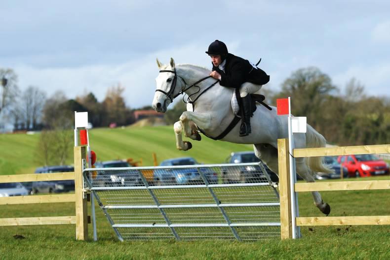 The Irish horse – genetic gold in your backyard