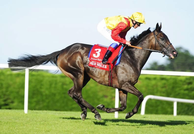 Intikhab retires from stallion duties at Derrinstown Stud