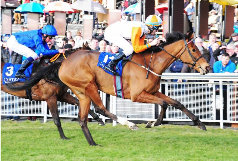 PEDIGREE ANALYSIS: Queen another of note for Jeremy