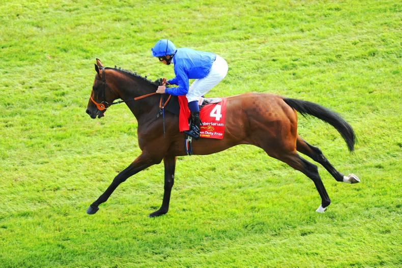 SIRE REVIEWS: Libertarian : Standing at Knockhouse Stud