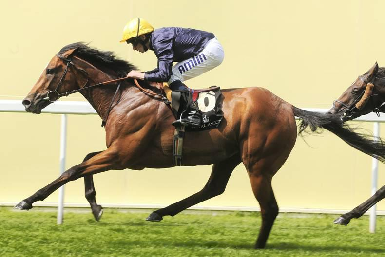 SIRE REVIEWS: Hillstar : Standing at Garryrichard Stud
