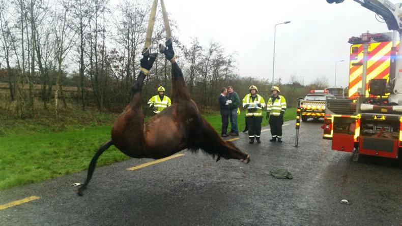 HORSE SENSE VIDEO: Dozens of riders and nearly 200 horses killed on UK roads