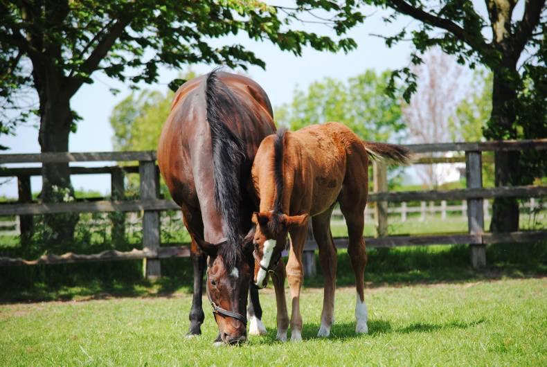 Reeling in the years: changes in Irish sport horse breeding