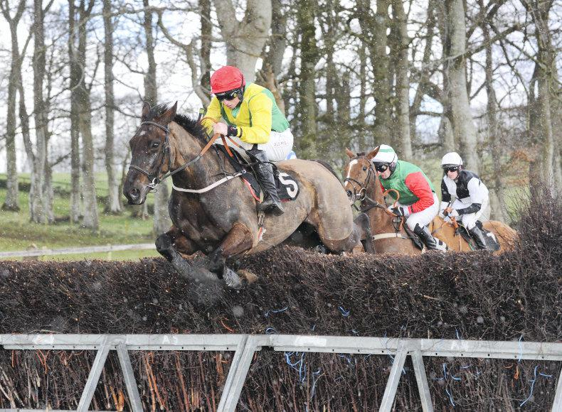 LOUGHANMORE MONDAY: Shake It Up gets his day