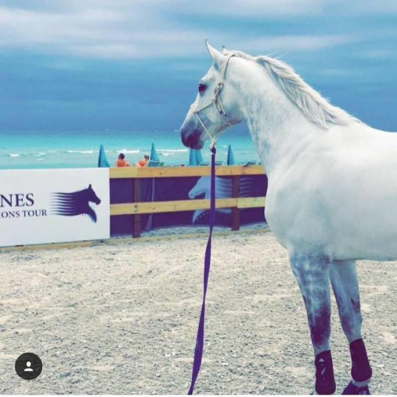 PHOTOS: Equine VIPs fly first class to Miami Beach