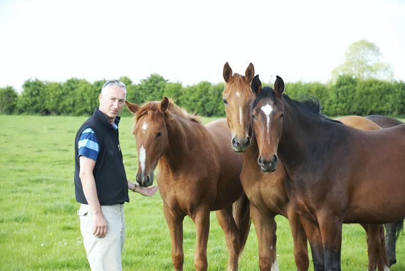 Go in at the top: Andrew Hughes on breeding international show jumpers