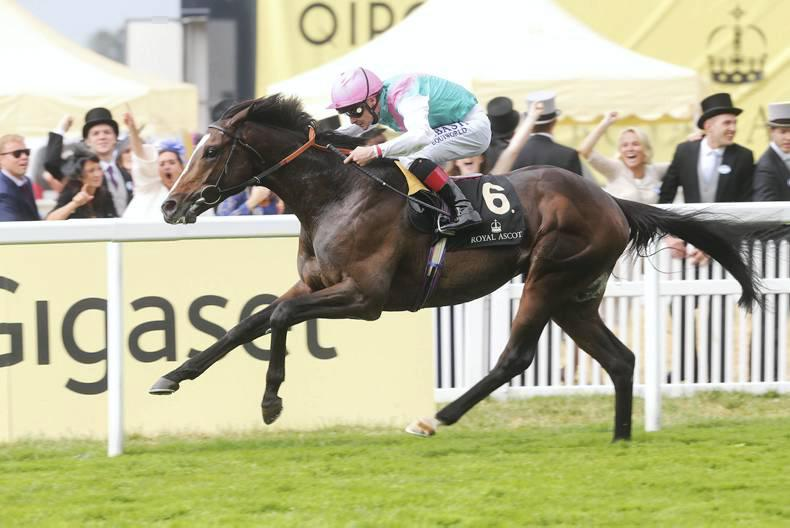 SIRE REVIEWS: Snow Sky : Standing at Ballycurragh Stud