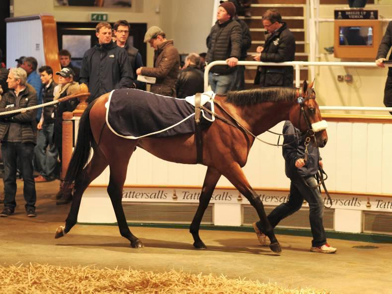 VIDEO: Invincible Spirit colts top day one of the Craven Breeze-Up Sale
