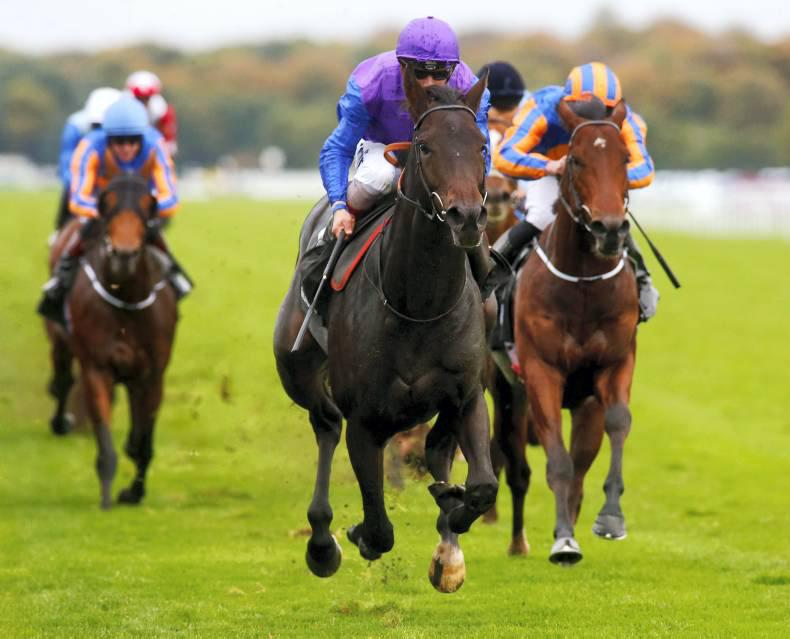 RACEBETS: Get on Tepin tonight and Marcel for the Guineas