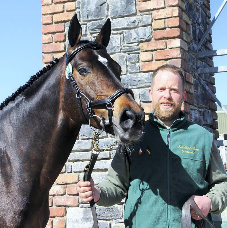 Irish Draught stallions lead the numbers at this year's HSI inspections