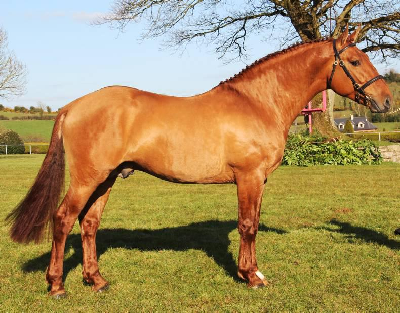 Stallion inspections: was it worth it?