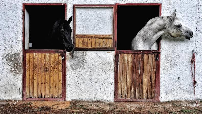 SPRING CLEANING: Are your stables eligible for grant aid?